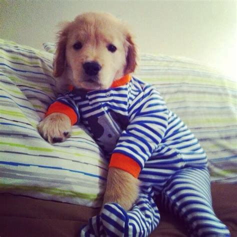 puppy pjs puppy in pajamas puppy pictures