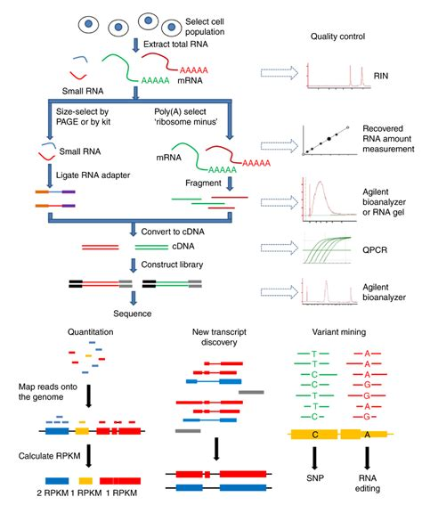 illumina sequencing workflow rna seq workflow the measurement of rna expression is a