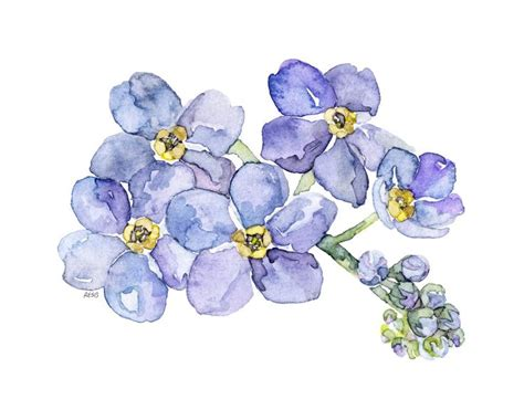 printable forget me not flowers 26 best images about forget me nots on pinterest