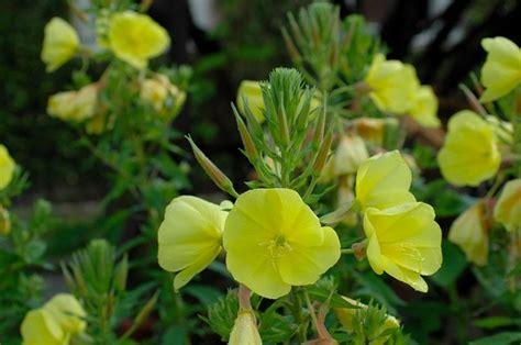 piante da appartamento con fiore fiori e piante piante da appartamento consigli per