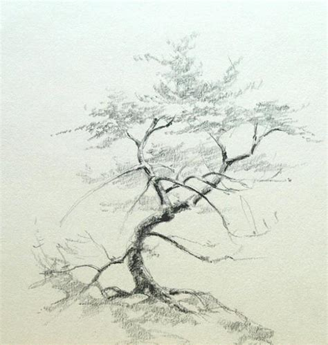 drawings of trees pencil drawing trees