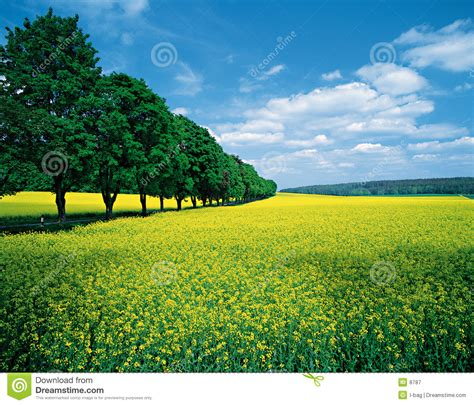 spring fields allee stock image image  agriculture