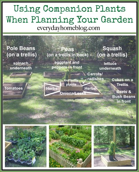 how to plan a raised bed garden