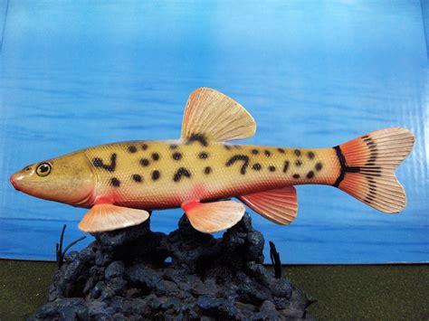 safari loach minnow  animal toy blog