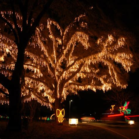 Where To See Christmas Lights In Charleston Aviv Service Charleston Lights