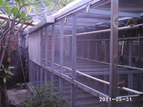 Jual Jagung Pakan Ternak Surabaya cara ternak ayam 2011