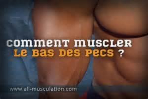 pectoraux triceps et 233 paules bossent avec les pompes