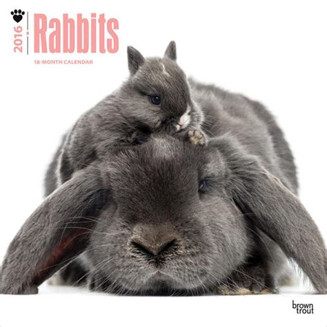 Cat Calendar 2018 Marks And Spencer Rabbits Calendars 2018 On Abposters