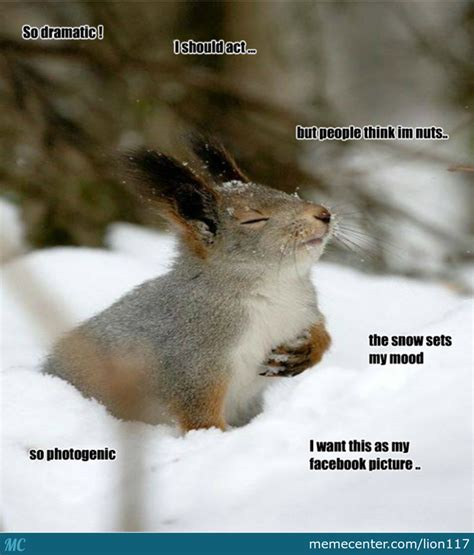 Dramatic Squirrel Meme - dramatic squirrel and photogenic he has such good