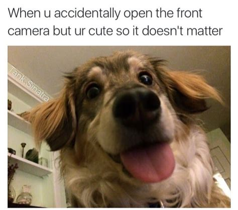 The Dog Meme - 62 adorable dog memes that will make you laugh all damn