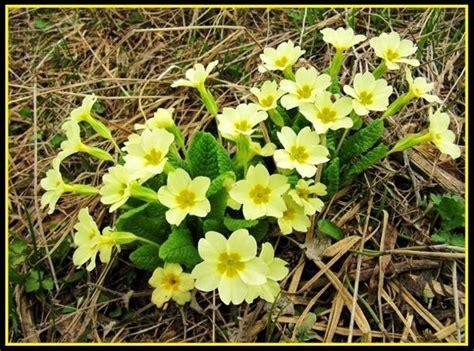 sementi fiori perenni fiori perenni piante perenni coltivare fiori perenni