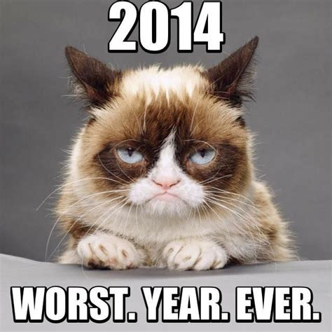 grumpy cat new year 17 best images about grumpy cat new year on