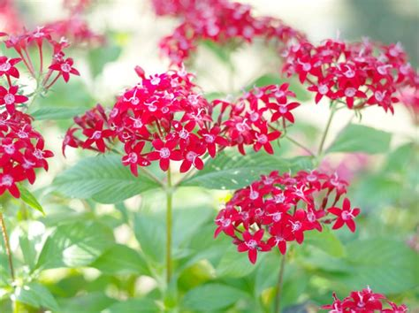 heat tolerant plants 10 heat tolerant plants that will survive and thrive