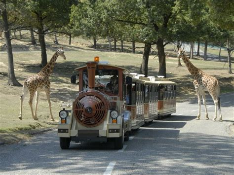 Ingresso Zoo Safari by Offerta Per I Ceristi Al Safari Park Vita In Cer