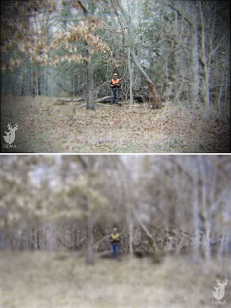 what colors can deer see can deer see blaze orange qdma