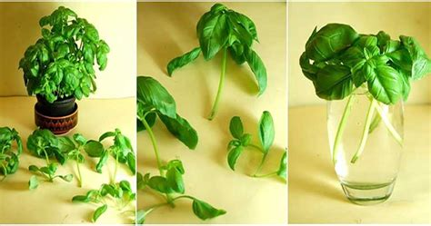 8 vegetables in 8 plants and 4 vegetables you can grow in water