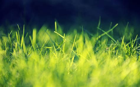 wallpaper hd green grass green grass wallpapers wallpaper cave