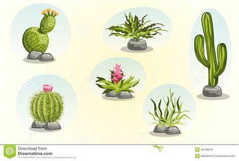 imagenes de animales y plantas del desierto colecci 243 n de cactus y de plantas de desierto ilustraci 243 n