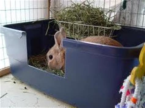 best bedding for rabbits toilet training what is required to house break a rabbit
