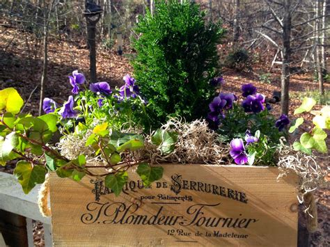 Coulter Gardens by Plant A Winter Window Box Hgtv