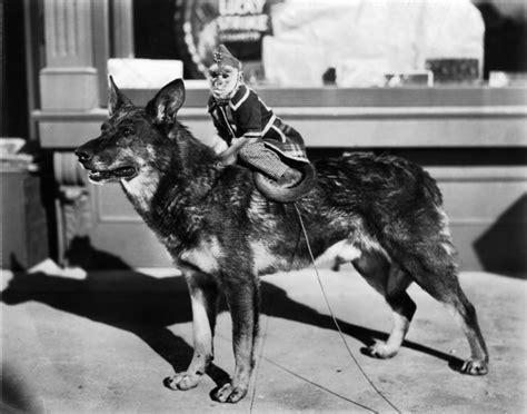 film seri rin tin tin top 10 famous hollywood dogs top10hq