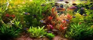 wie lange beleuchtung im aquarium das aquarium einrichtung und pflege