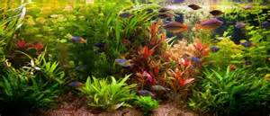 aquarium beleuchtung wie lange hintergrundpflanzen im aquarium