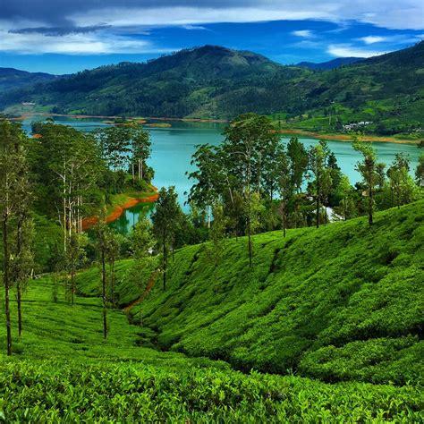 Ceylon Srilanka ceylon tea trails experiencing luxury in sri lanka