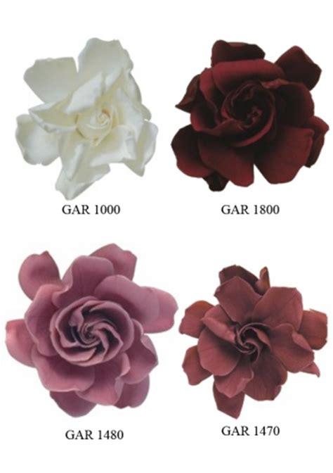 Gardenia Color Preserved Flowers