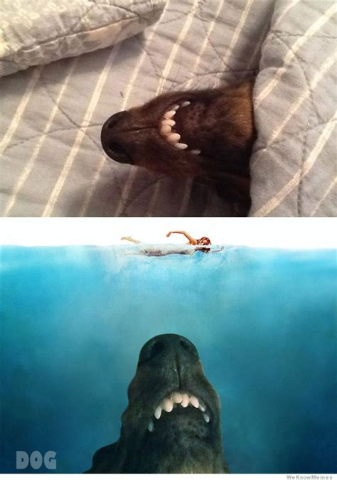 Jaws Meme - image gallery jaws meme