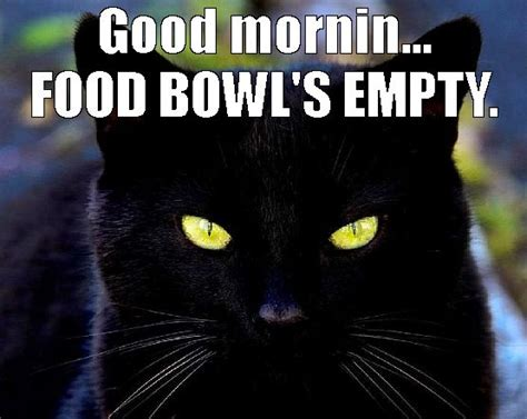 Funny Black Cat Memes - funny cats hilarious cats on internetz image 3030468