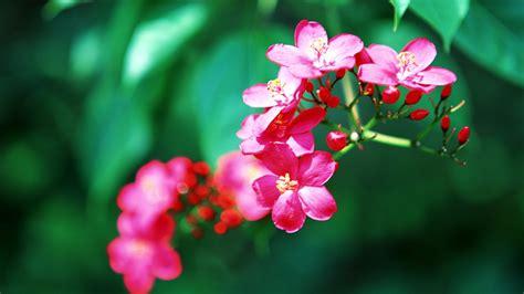 Tropical Flowers fleurs tropicales fond d 233 cran