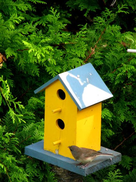 finch house plans yellow finch bird house plans woodproject