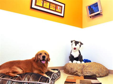 puppy daycare sf worry free boarding convenient to san francisco