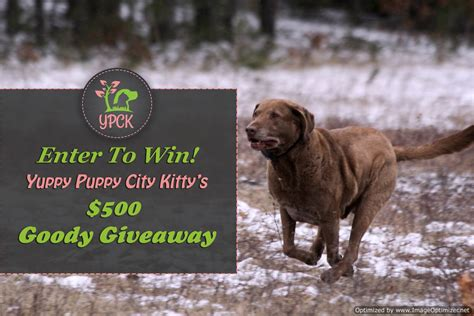 Free Puppy Giveaway - yuppy puppy city kitty 500 goody giveaway sponsored 2