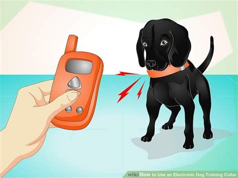 how to use electronic collars how to use an electronic collar 10 steps