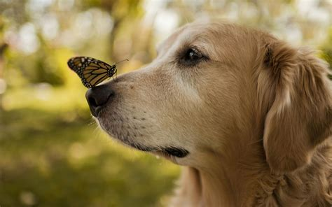 butterfly  dog nose photo hd wallpapers