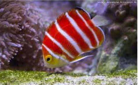 Harga Ikan by Ikan Hias Air Laut