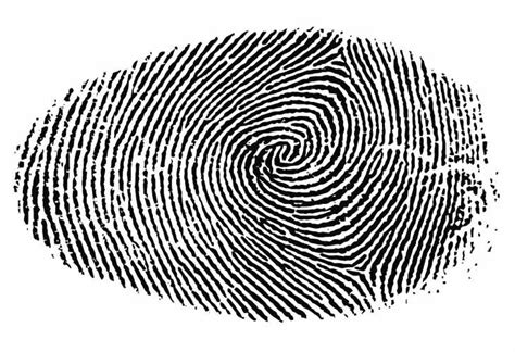 fueling iphone  fingerprint security speculation product reviews net