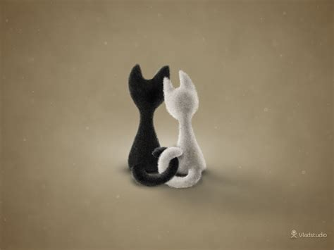 wallpaper cat love cat love wallpapers 37 wallpapers adorable wallpapers