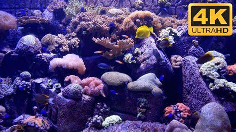 beautiful uhd aquarium screensaver  tv wallpaper youtube