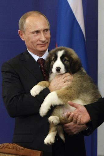 putin puppy help choose a name for the prime minister of russia s puppy