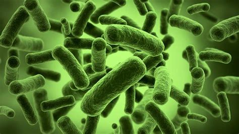 best gut bacteria how gut bacteria can your mood and food choices