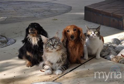 cats and dogs 2 2 dogs and 2 cats myria