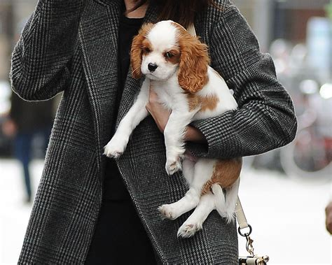 selena gomez puppy we can t get enough of selena gomez carrying a puppy around new york city hellogiggles