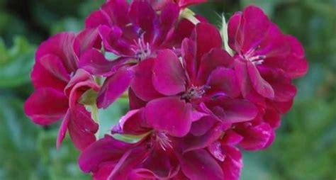 vaso da fiori fiori da vaso fiorista