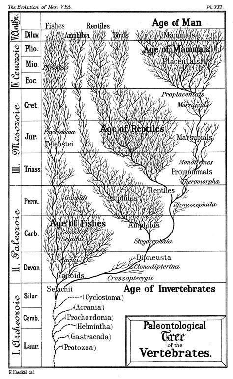 Timeline of human evolution - Wikipedia