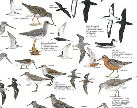 british birds identification memes