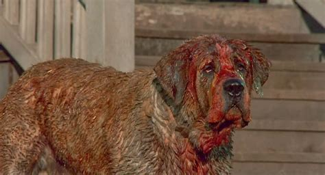 what of is cujo 15 things you probably didn t about fuzz ifc