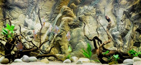 Photo Realistic Wall Murals 25 aquarium backgrounds wallpapers images pictures